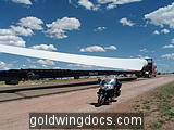 Wind Mill Wing and Gold Wing