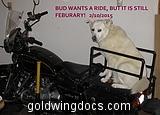 Bud Wants a ride, but it's still February