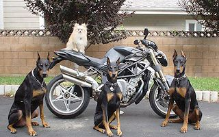 Dogs Guarding Bike