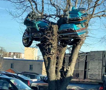 GL1500 in Tree