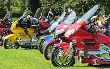 Goldwings on Grass