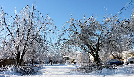 Ice Storm Damage in Ontario
