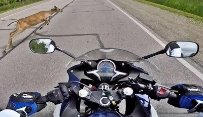 Motorcycle vs Deer