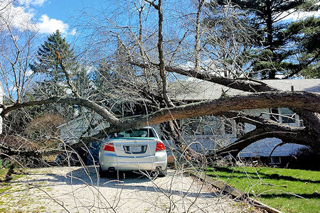 Tree fell on car and house