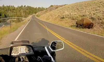 Buffalo in Yellowstone Park seen while riding on GL1500